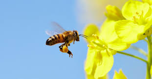 EU Bans Neonicotinoid Insecticides